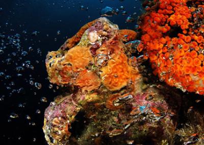 Grotte del Formaggio