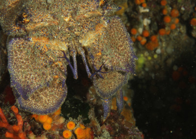 Grotte del Formaggio Cicala